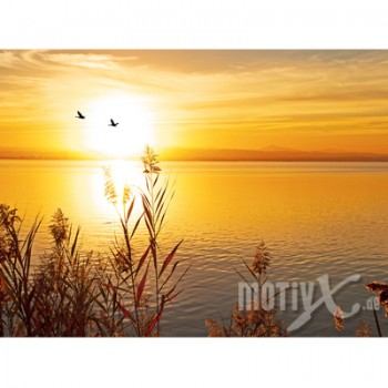 Motiv - Abendsonne am See